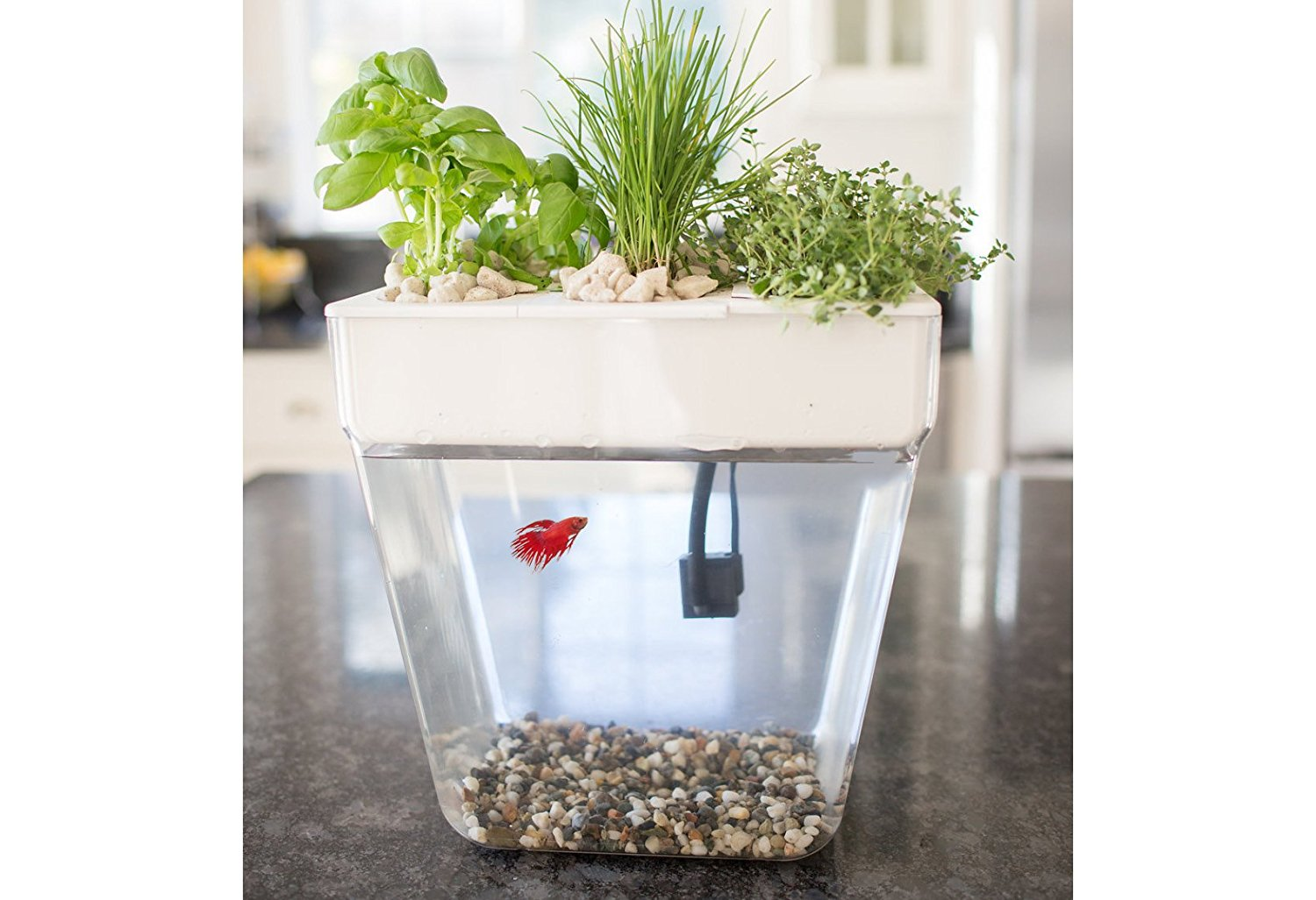 Best Aquaponic Betta Fish Tanks In 2018