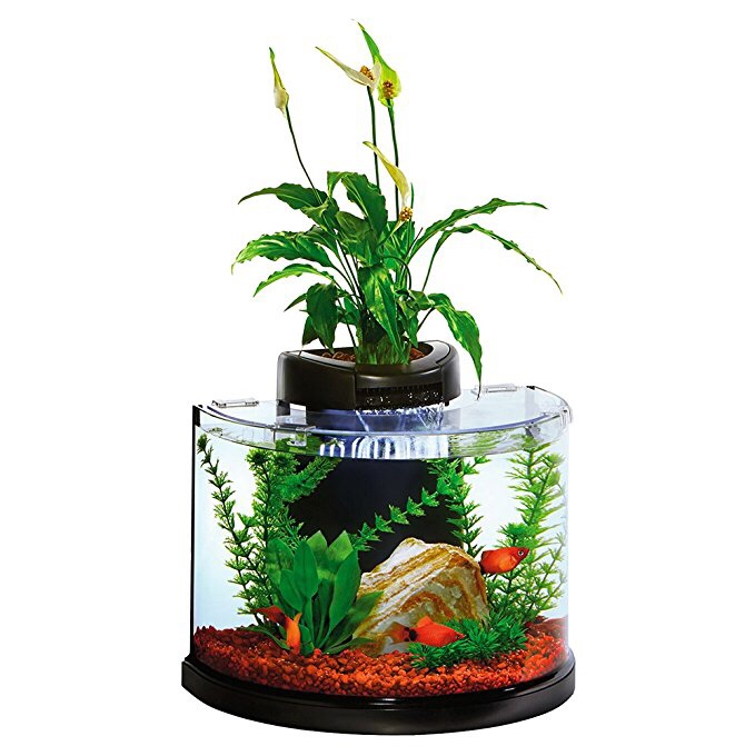 Best aquaponic betta fish tanks in 2018 for Betta fish tanks amazon